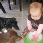 3 Things  Puppies and Toddlers Have in Common: Service-dog-in-training diary