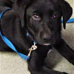 What Would You Do? Puppy first; Service-Dog-in-Training