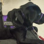 When is a Dog a Service Dog OR an Excuse?